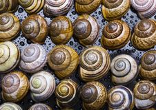 Free Shells In Water Royalty Free Stock Photography - 2077597