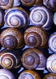Free Shells Stock Photography - 2077602