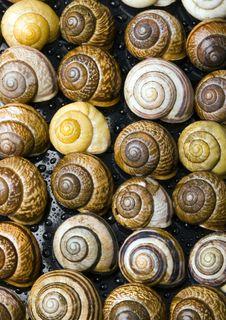 Free Shells Royalty Free Stock Image - 2077606