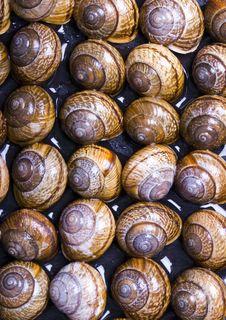 Free Shells Stock Photos - 2077663