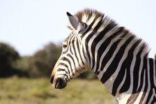 Free A Burchells Zebra Stock Images - 2078874