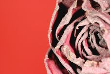 Dried Rose On Red 2 Stock Photos