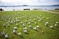 Free Rows Of Seagulls Stock Photo - 20707310