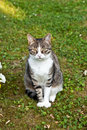 Free Cute Cat In The Garden Royalty Free Stock Photos - 20708658