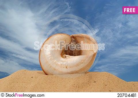 Free Large Seashell On The Sand Stock Image - 20704481