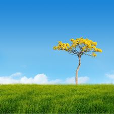 Free Tree On Field Stock Photo - 20701860