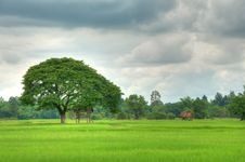 Free Hut In The Rice Field Royalty Free Stock Photography - 20702227