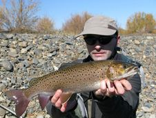 Free Trout Fishing Stock Image - 20702511