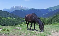 Free Brown Horse On Mountain Grassland Stock Photography - 20702642