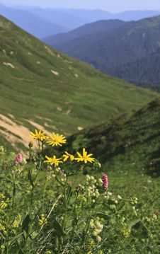 Free Yellow Flowers On Hillside Stock Photography - 20702732