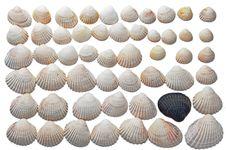 Free Seashels Stock Photography - 20703182