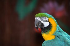 Free Colorfull Parrot Royalty Free Stock Photography - 20704447
