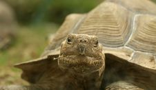 Free Head Of Very Big Tortoise Stock Image - 20704451