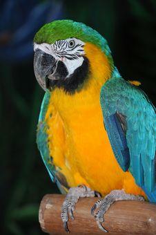 Portrait Of A Parrot Stock Images