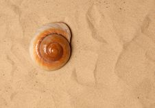 Free Large Seashell On The Sand Royalty Free Stock Image - 20704506