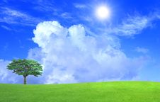 Free Green Field Royalty Free Stock Photography - 20705347