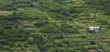 Hillside In Cinque Terre, Italy Royalty Free Stock Photo