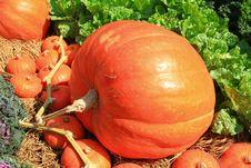Free Big Size Of Pumpkin Stock Photography - 20705852