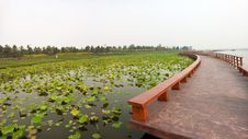 Free Lotus Pond With Zigzag Wooden Bridge Royalty Free Stock Images - 20706129