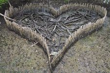 Free Heart Of Mangrove Forest Stock Photography - 20706182