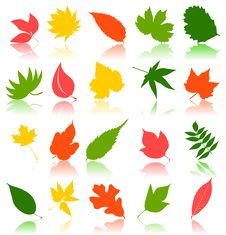 Free Leaf9 Royalty Free Stock Photography - 20706587