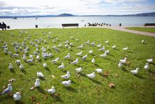 Rows Of Seagulls Stock Photo