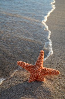 Free Starfish On A Tropical Beach Stock Images - 20708404