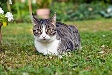 Cute Cat In The Garden Stock Photography