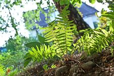 Free Beautiful Fern In Dense Forest Stock Images - 20708704