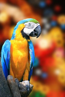 Free Colorful Parrot Royalty Free Stock Photography - 20708807
