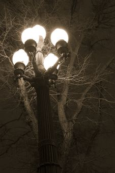 Free Glowing Lantern Near The Tree Branches Stock Photos - 20708853