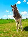 Free Horse Stock Image - 20718191