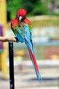 Free Scarlet Macaw Stock Photo - 20718520