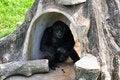Free Chimpanzee Stock Images - 20719144