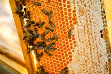 Free Worker Bees Royalty Free Stock Images - 20711909