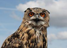 European Eagle Owl Stock Photo