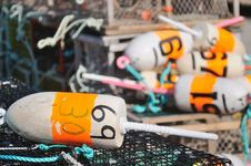 Free Lobster Trap Buoys Stock Photos - 20713163