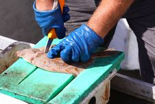 Free Cutting Fish Stock Images - 20713204
