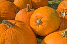 Free Harvested Pumpkins Stock Images - 20713224