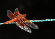 Free Dragon Fly Royalty Free Stock Photography - 20713497