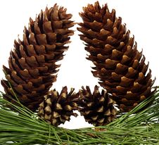 Free Four Fir-cone Stock Images - 20714014