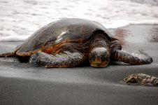 Free Sleeping Sea Turtle Stock Photos - 20714573