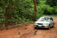 Free The Car Is Surrounded By Monkeys Stock Photography - 20715692