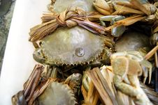 Sea Crab Stock Image