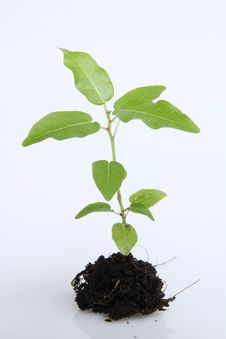 Tree And Hand  For  Save World. Royalty Free Stock Images
