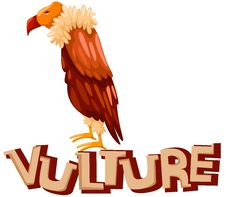 Free Vulture Stock Image - 20717761