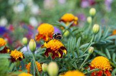 Free Bumble-bee Sun Bathing Stock Photos - 20718573