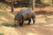 Free Rhino Stock Image - 20719001