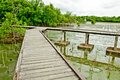 Free Wooden Walkway In Mangrove Forest Royalty Free Stock Image - 20721626