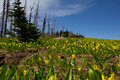 Free Glacier Lilly Meadow Royalty Free Stock Image - 20723726